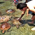 turtle-island-nusa-dua-bali_1